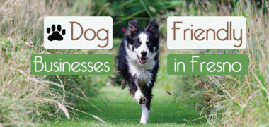 Dog-Friendly Businesses in Fresno