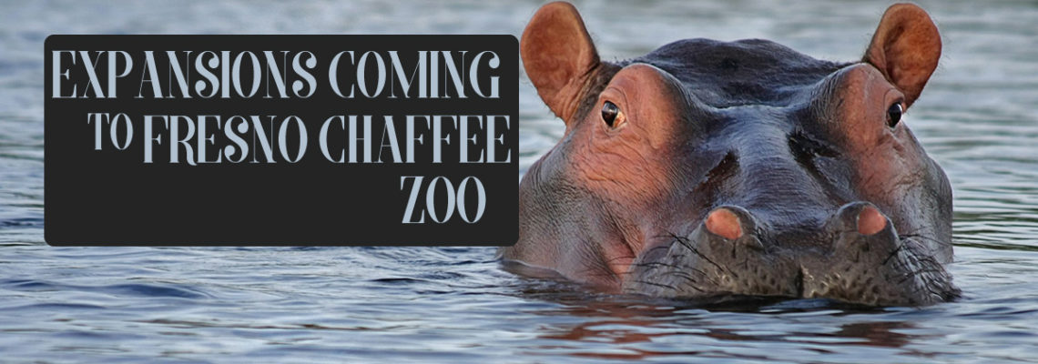 Expansions Coming to Fresno Chaffee Zoo