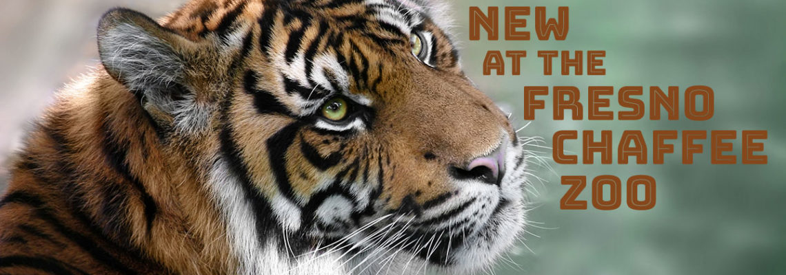 What's New at the Fresno Chaffee Zoo